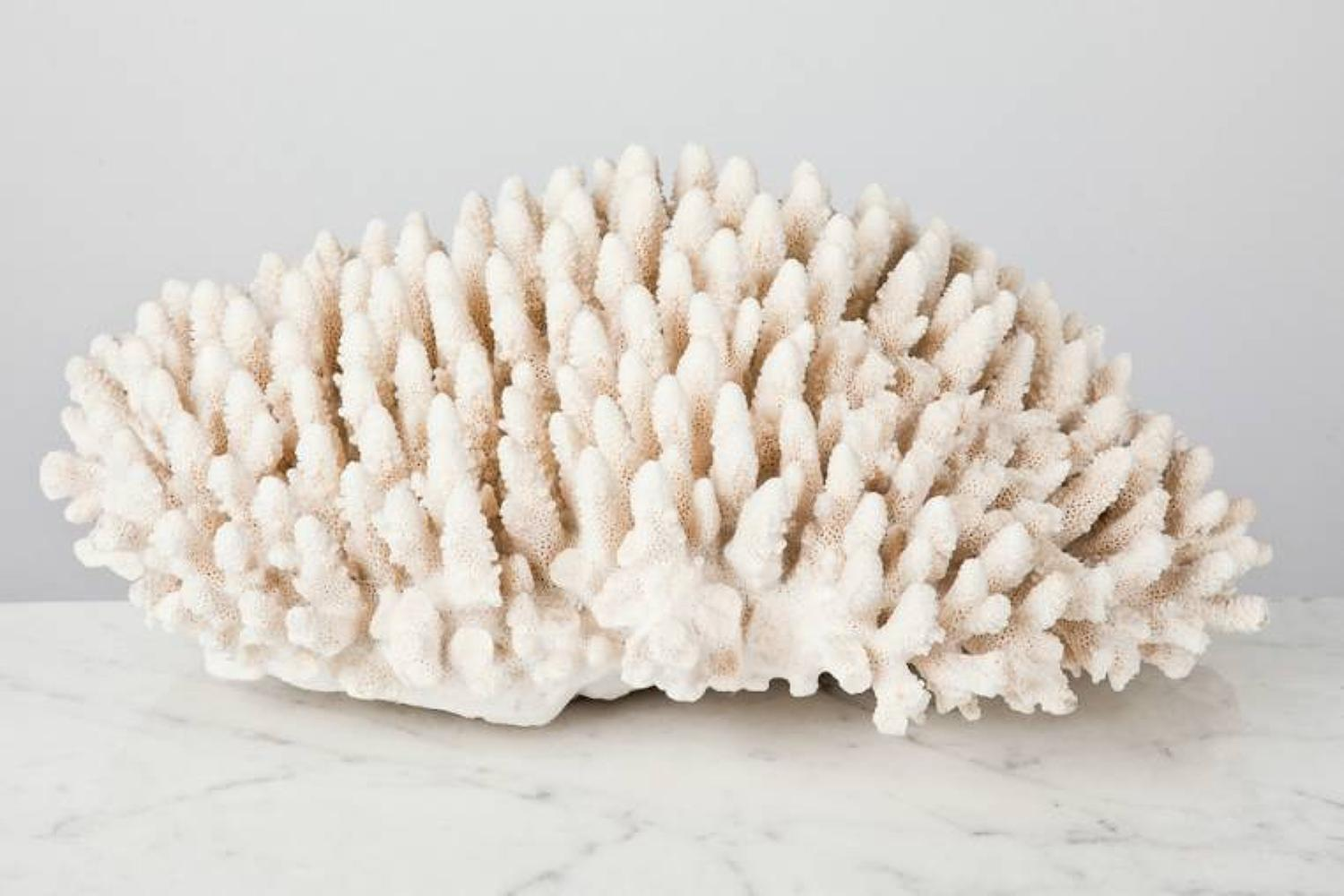 Large coral form an Edwardian collection