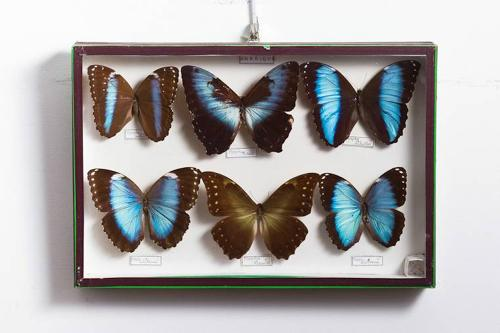 20 display boxes containing butterflies.