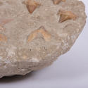Shark Tooth Fossil in Matrix - picture 4